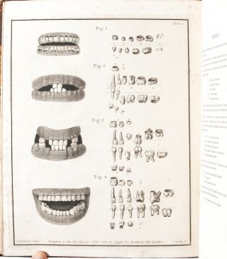 Natural History of the Human Teeth