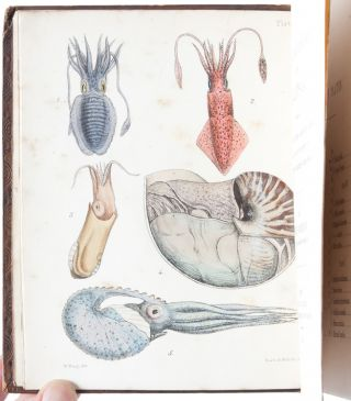 Image 4 of 9 for A Popular History of the Mollusca; Comprising a Familiar Account of their...