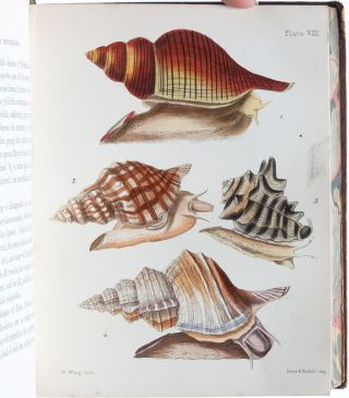 Image 7 of 9 for A Popular History of the Mollusca; Comprising a Familiar Account of their...