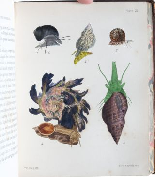 Image 8 of 9 for A Popular History of the Mollusca; Comprising a Familiar Account of their...