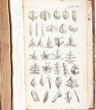 Image 7 of 10 for An Introduction to Botany in a Series of Familiar Letters