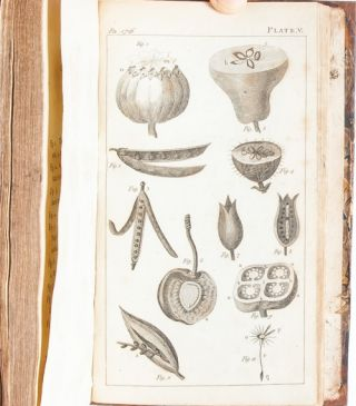 Image 8 of 10 for An Introduction to Botany in a Series of Familiar Letters