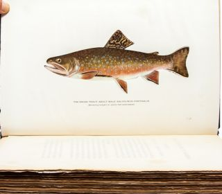 Image 6 of 8 for Trout Fly-Fishing in America