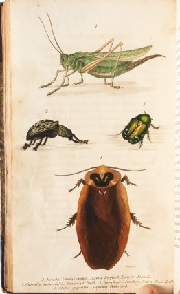 Letters on Entomology, Intended for the Amusement and Instruction of Young Persons