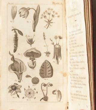 An Introduction to Botany in a Series of Familiar Letters