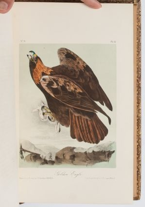 Image 3 of 11 for The Birds of America [together with] The Quadrupeds of North America