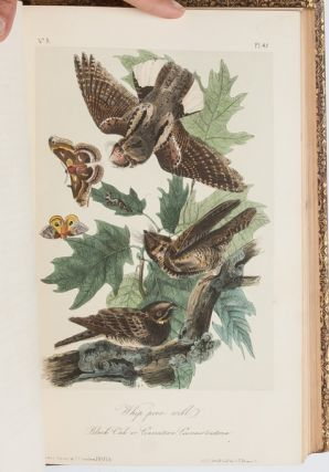 Image 4 of 11 for The Birds of America [together with] The Quadrupeds of North America