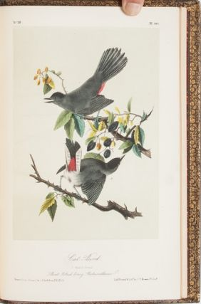 Image 5 of 11 for The Birds of America [together with] The Quadrupeds of North America