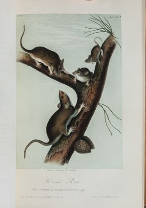 Image 7 of 11 for The Birds of America [together with] The Quadrupeds of North America