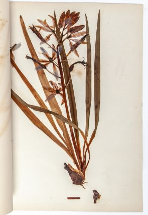 Image 5 of 8 for State Normal Herbarium, a collection of botanical research, sketches, and samples