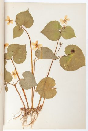 Image 6 of 8 for State Normal Herbarium, a collection of botanical research, sketches, and samples