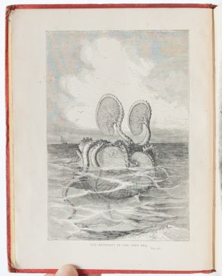 Image 7 of 8 for The Sea and its Wonders